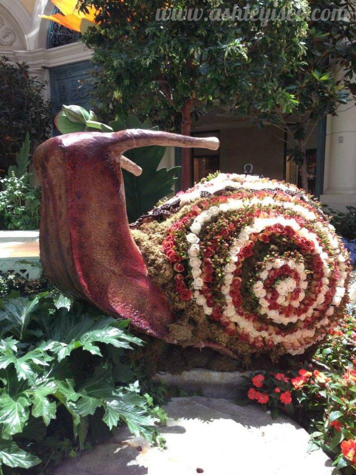 Racing snail