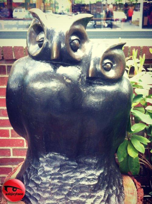 Owls-edited